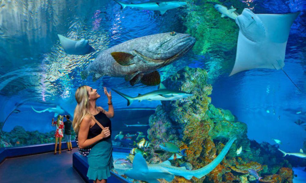 Aquarium de Cairns