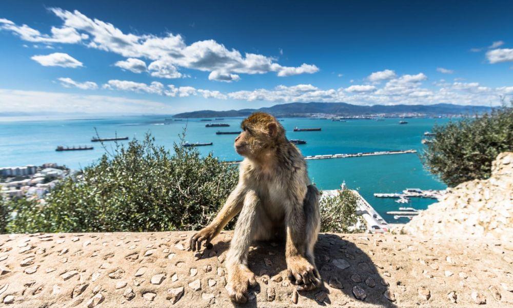 Singe au Rocher de Gibraltar