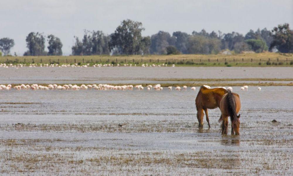 Marais de Doñana