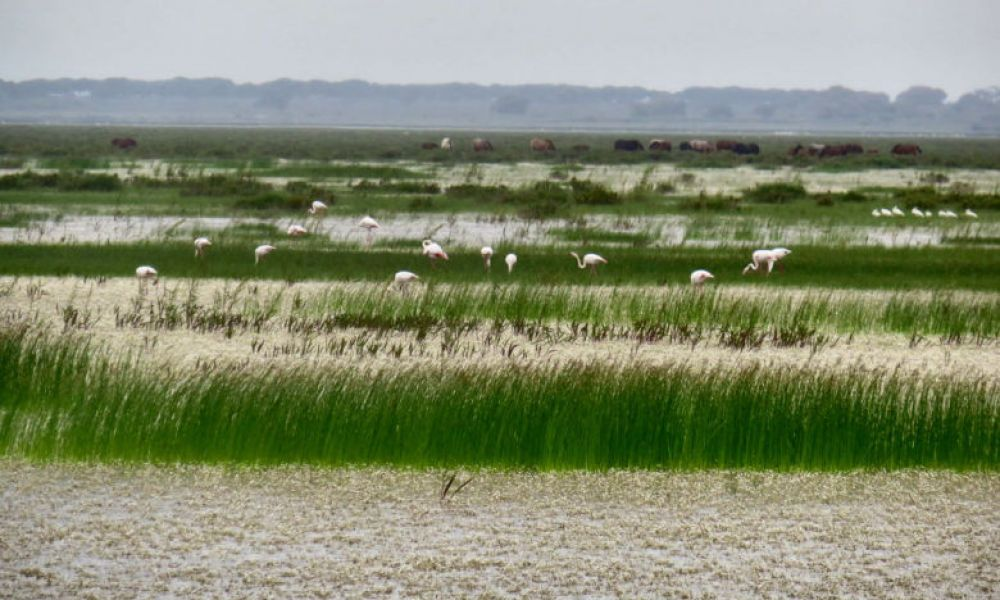 Marais du Parc National de Doñana