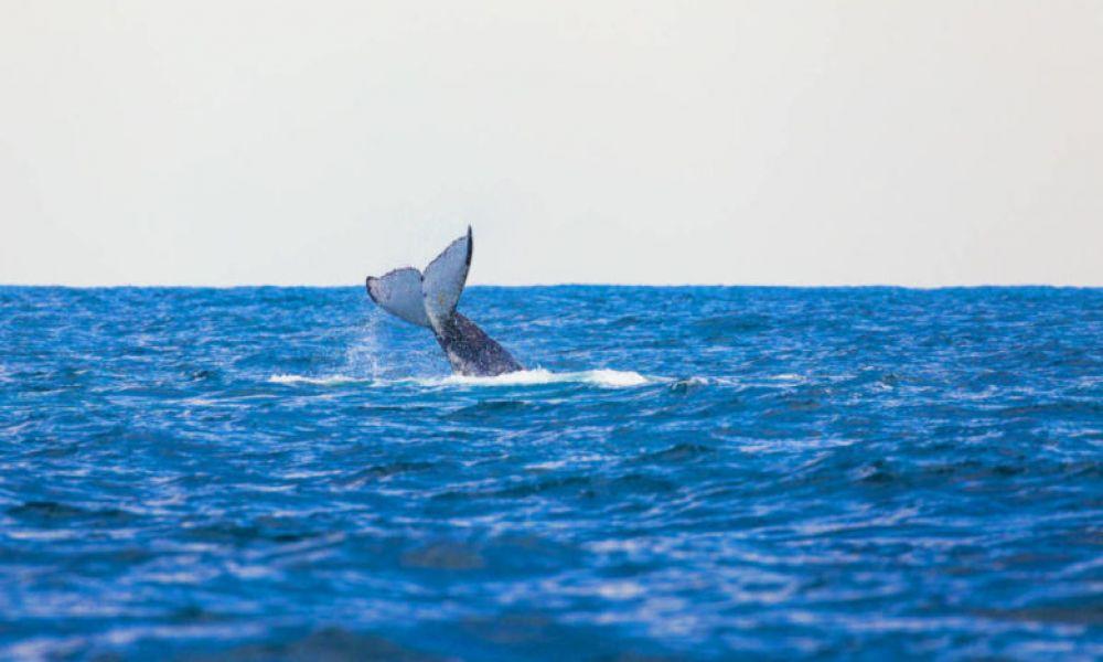 Une des baleines de l'excursion