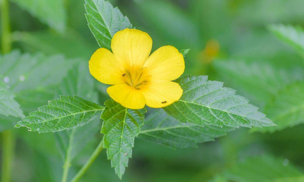 Les jolies fleurs du jardin botanique de Guayaquil