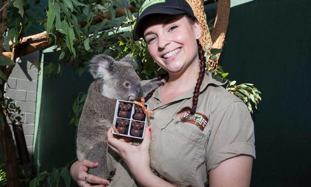 Zone des koalas