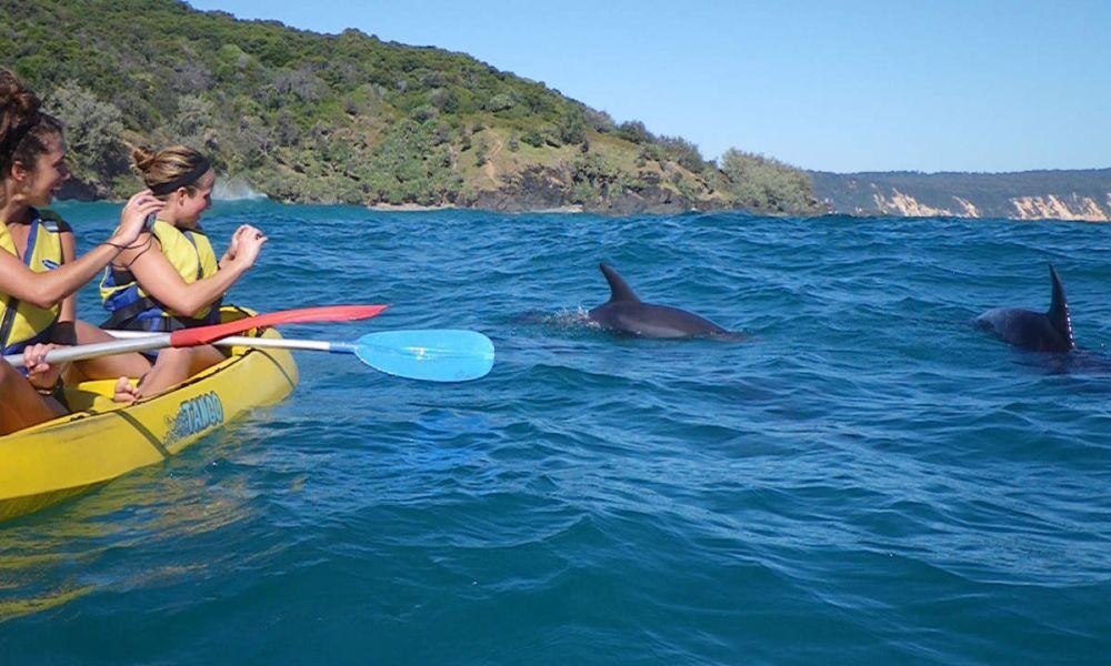 Observation de dauphins