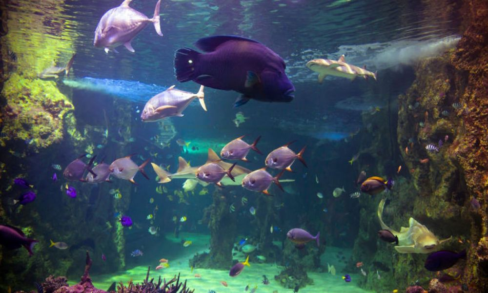 Poissons de l'aquarium