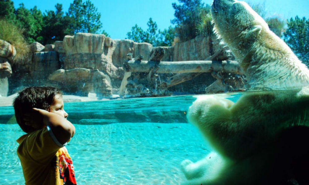 Ours polaires du Zoo de San Diego