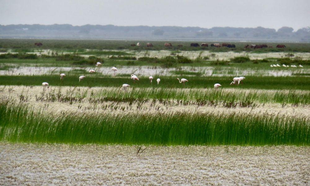 Parc National de Doñana