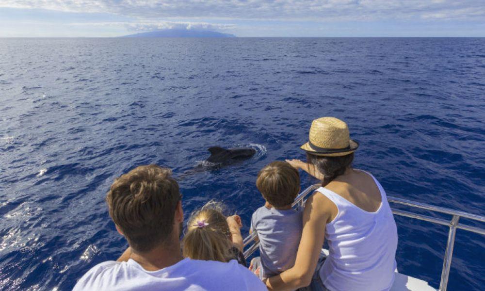 Observation de cétacés en mer près de Tenerife