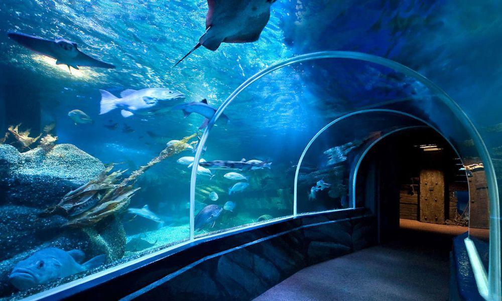 Tunnel du SEA LIFE Berlin