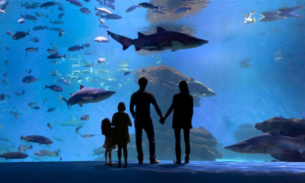Famille au Palma Aquarium