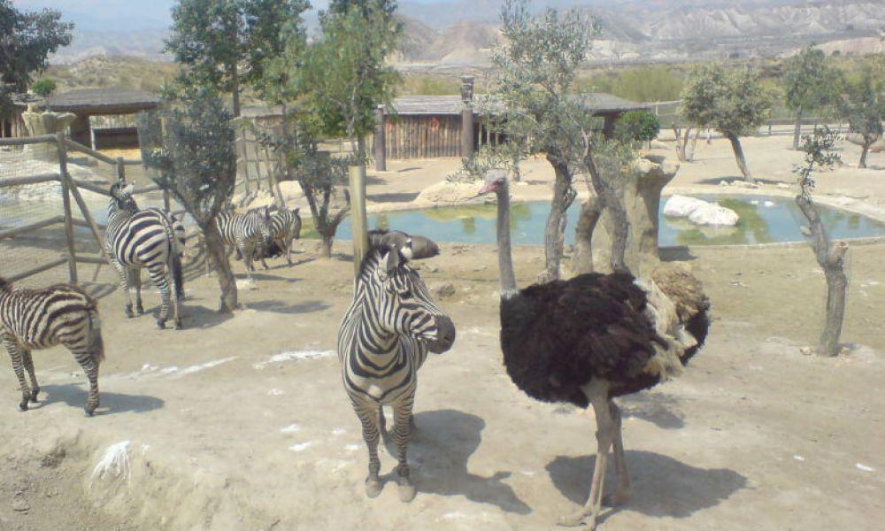 Zoo de Mini Hollywood