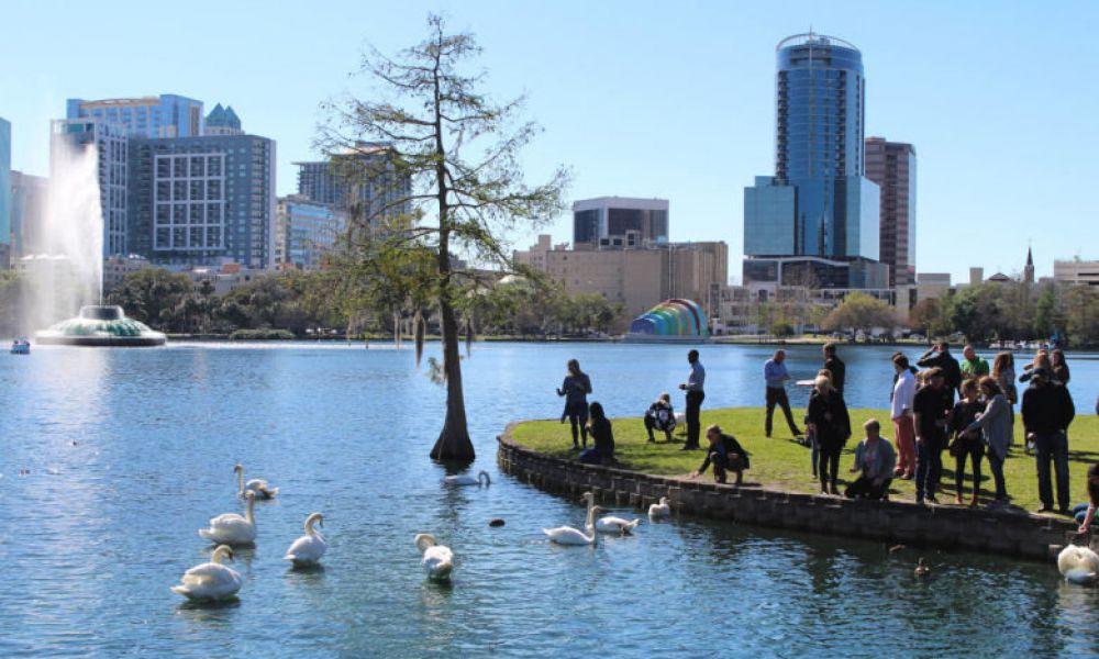 Nourrir les cygnes du lac