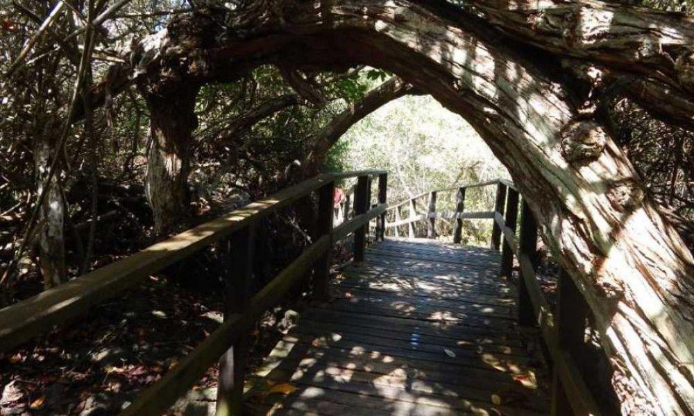 Passerelle de bois de Concha Perla