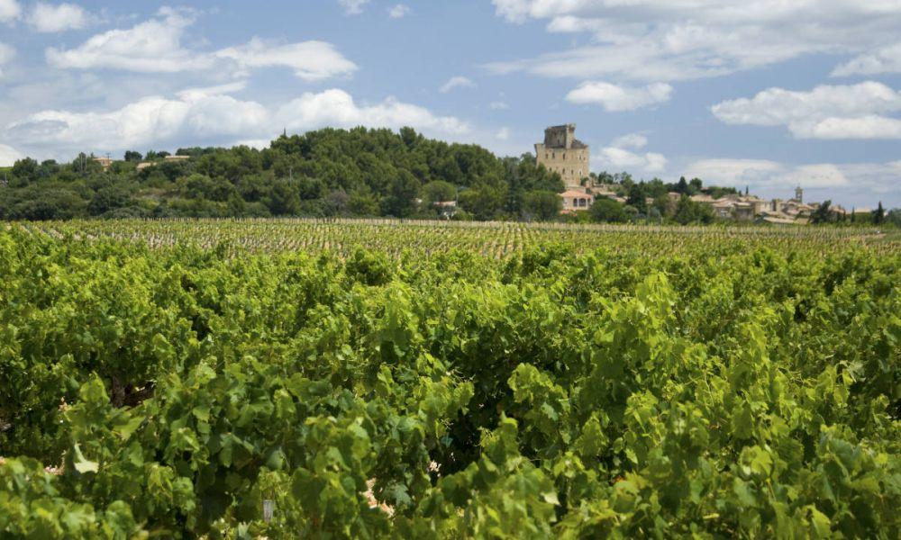 Vignobles de Châteauneuf du Pape