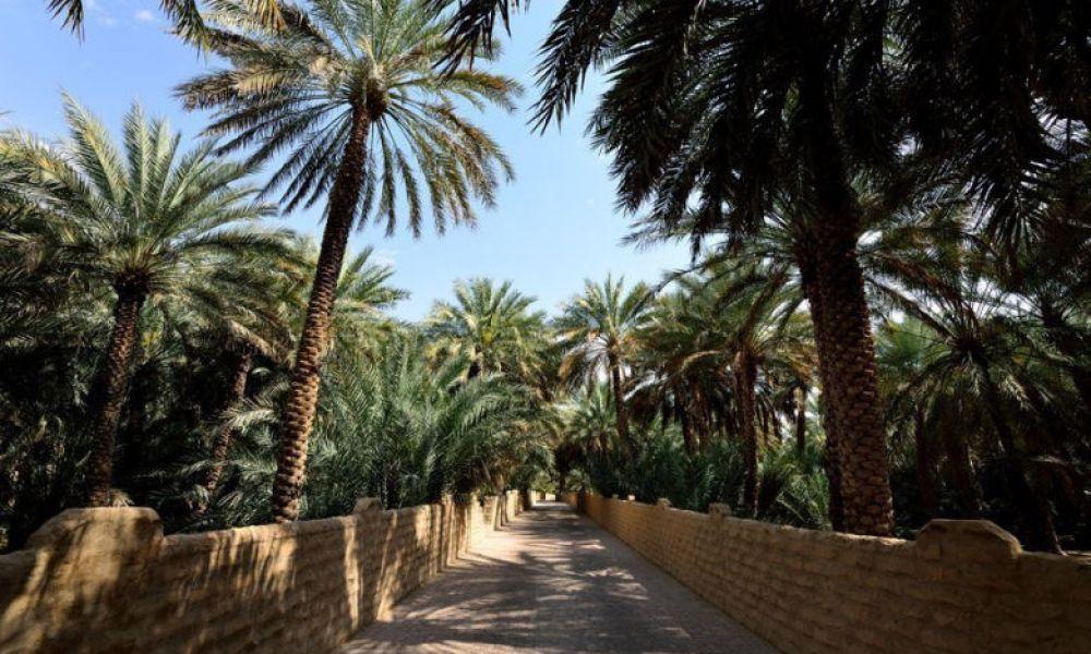 L'un des oasis de Al Aïn