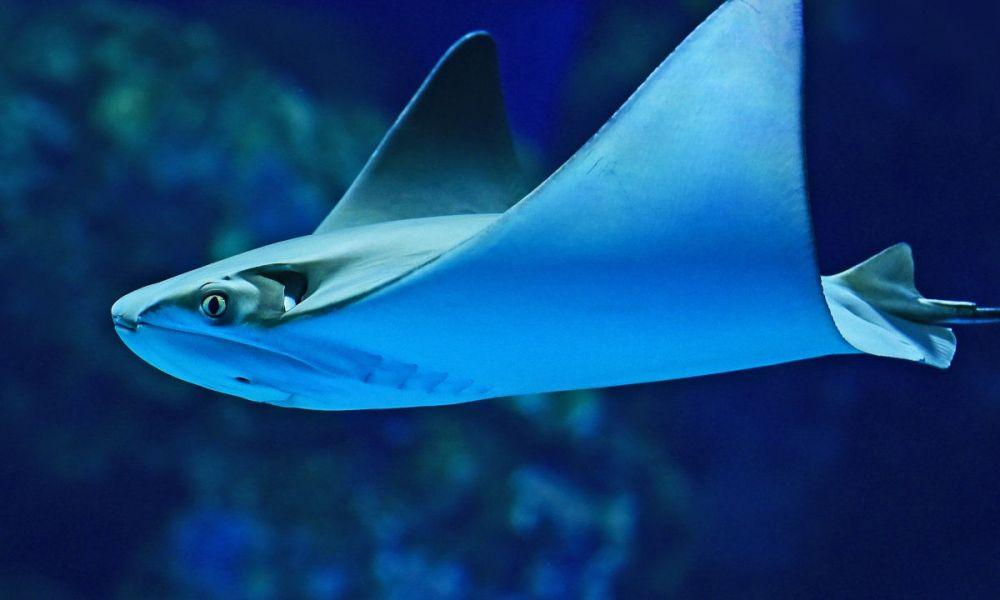 Profiter de l'Aquarium de Cairns