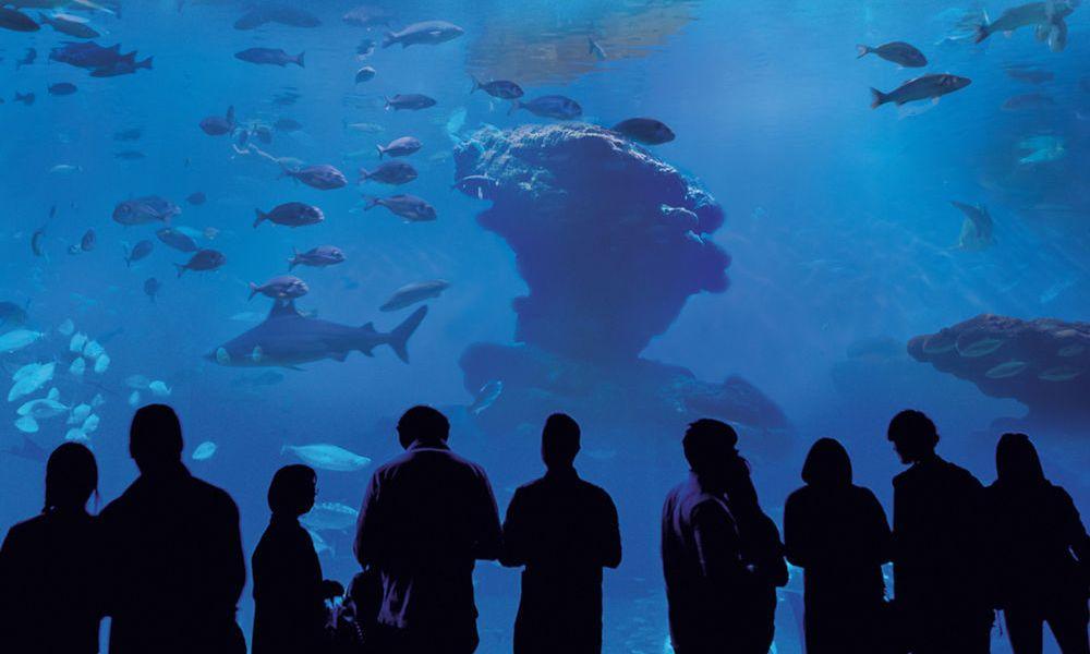 Groupe au Palma Aquarium
