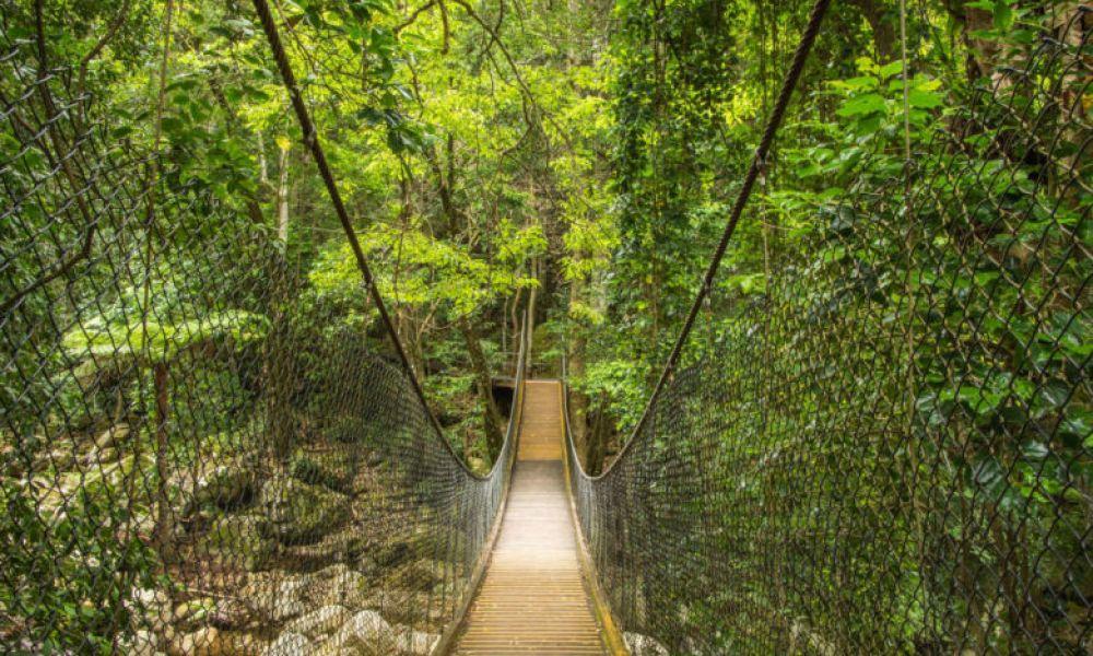 Pont de la forêt tropicale