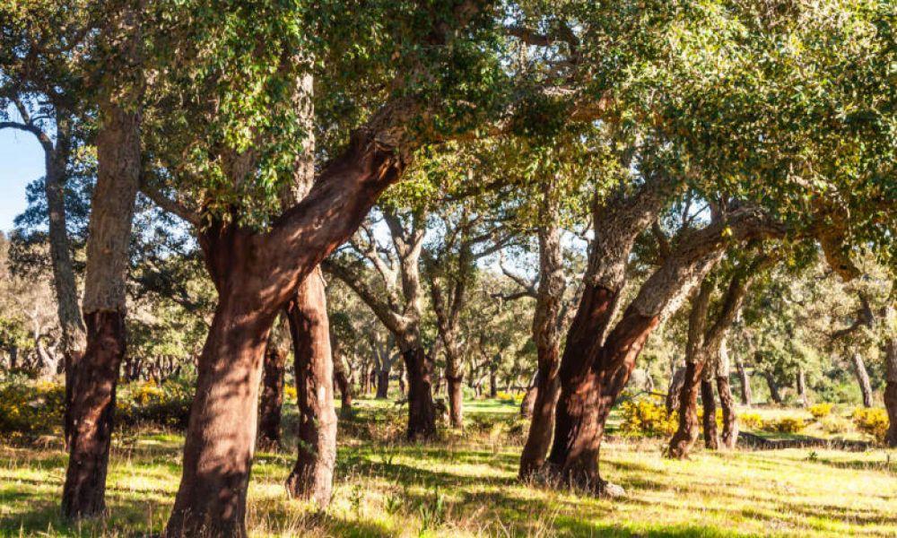 Parc Naturel des Alcornocales