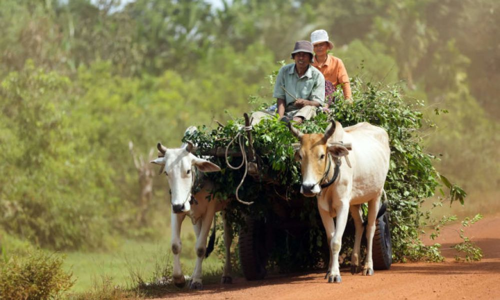 Agriculteurs cambodgiens