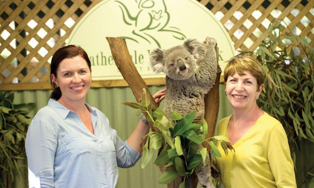 Le koala du WILD LIFE Sydney
