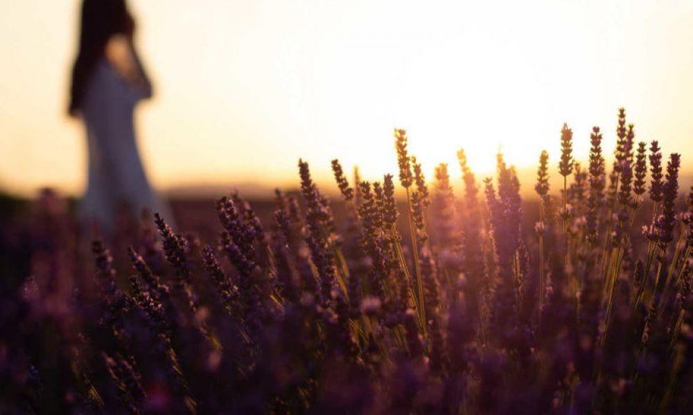 Marcher dans un champs de lavande