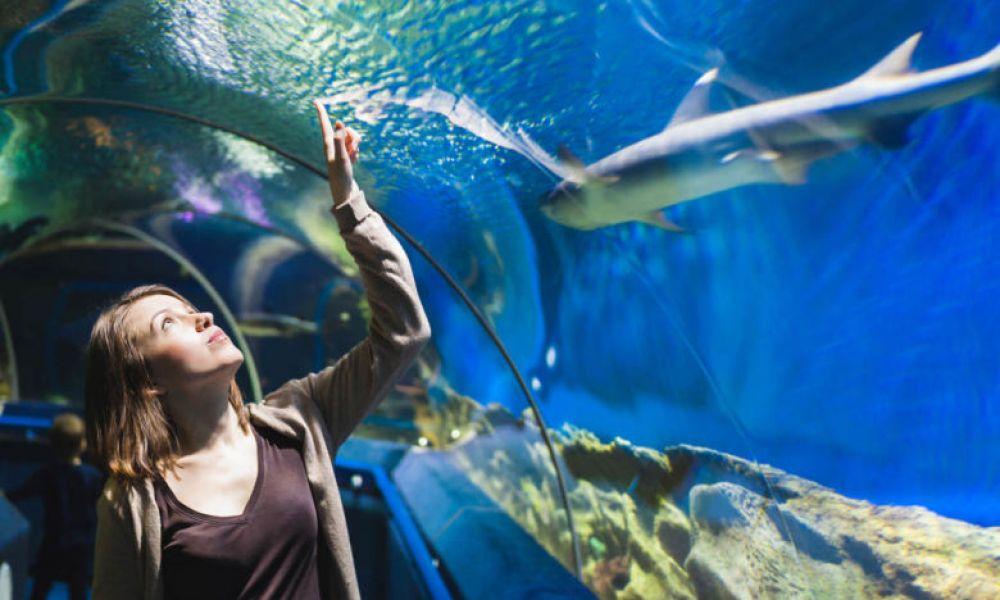 Visite de l'aquarium de Roquetas de Mar