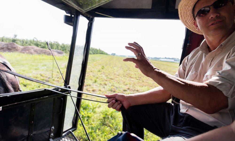 Balade en calèche Amish