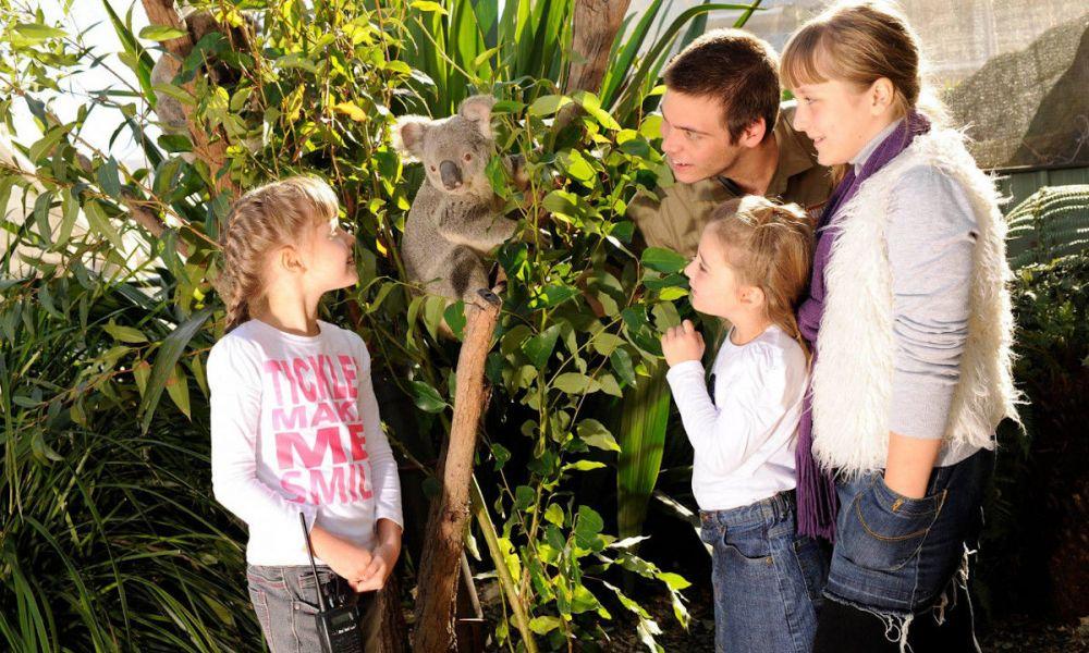 Profitez des koalas