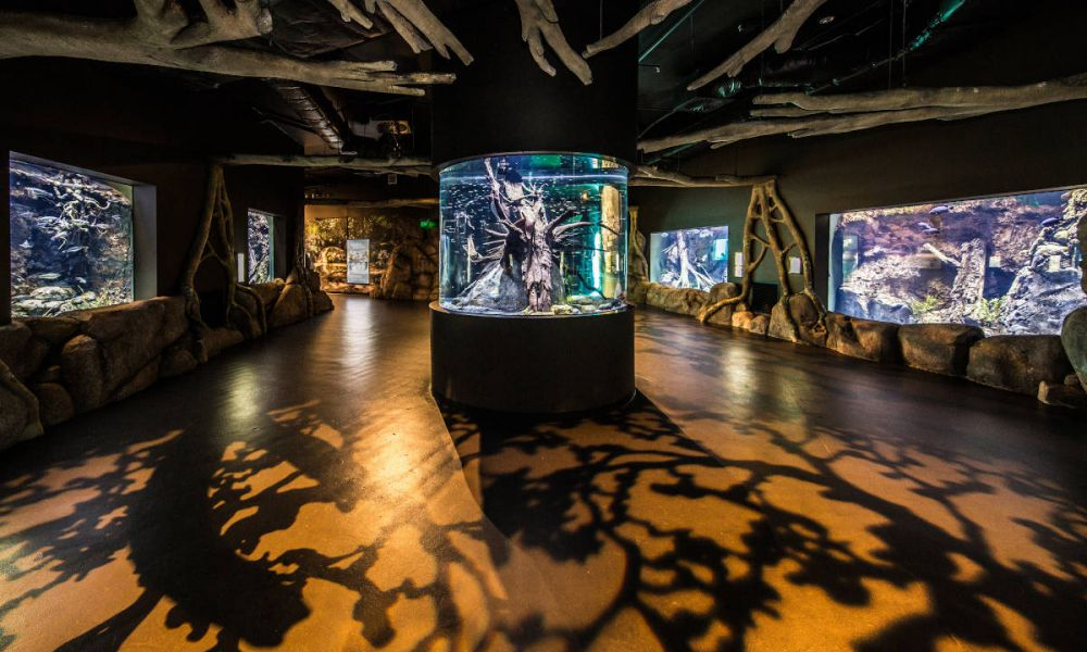Les salles de l'Aquarium de Cairns