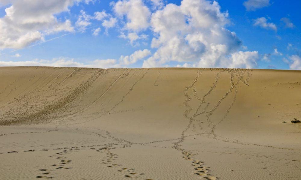 Dunes de sand tobogganing