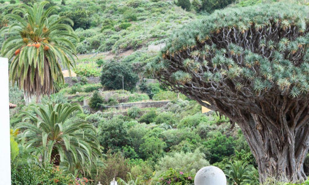 Excursión al Acuario y Rocky Cay