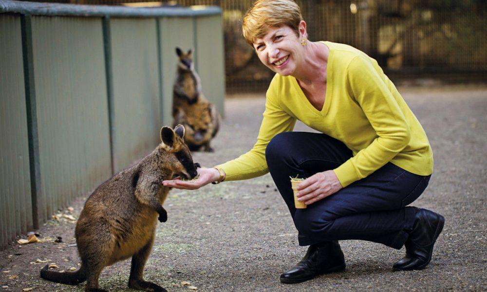 Un bébé kangourou dans le WILD LIFE Sydney