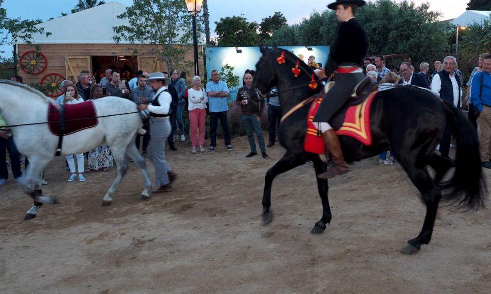 Les chevaux du domaine Mas Aureum