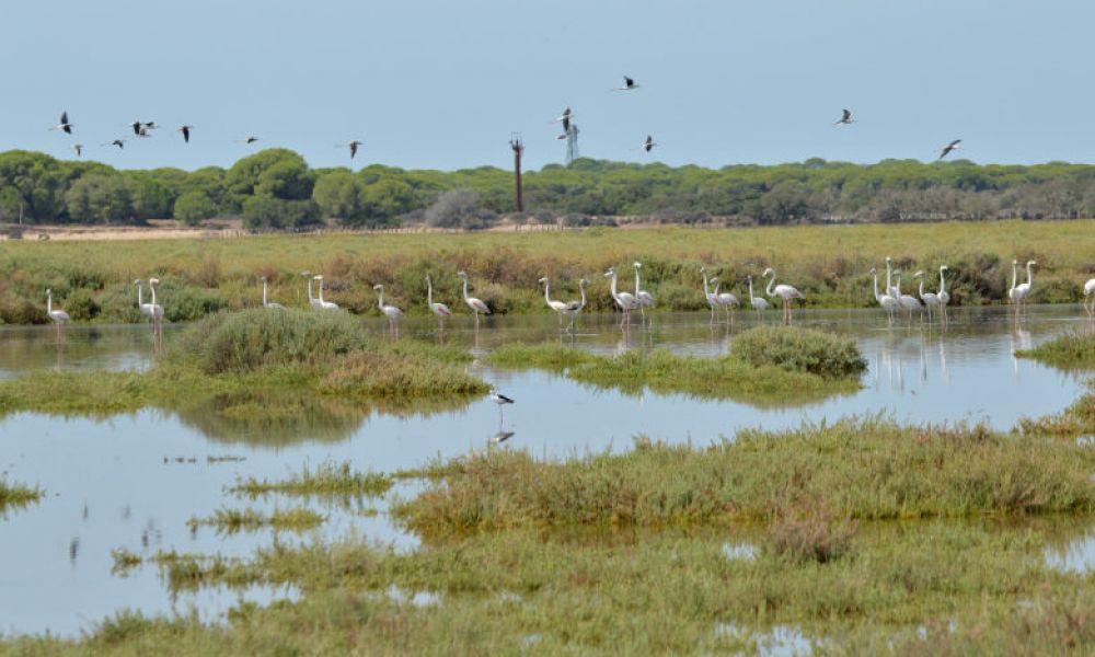 Paysage du Parc National de Doñana