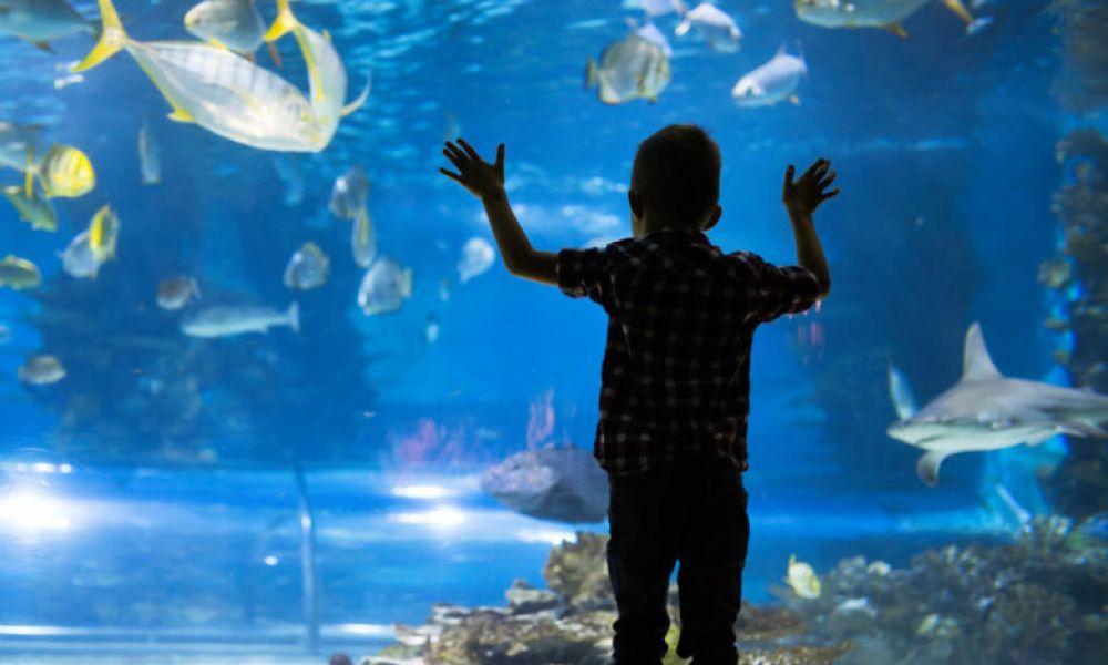 Contemplation des espèces marines