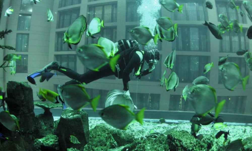 Plongeur dans l'aquarium géant