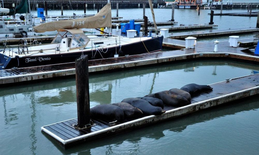 Des lions marins dans Fisherman's Wharf