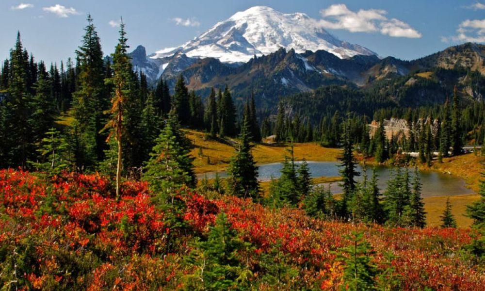 Paysage du Parc National Mont Rainier