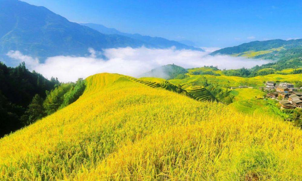 Les rizières de Longsheng