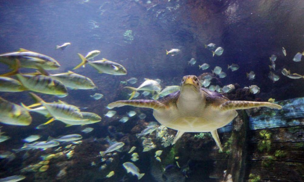 Une belle tortue marine